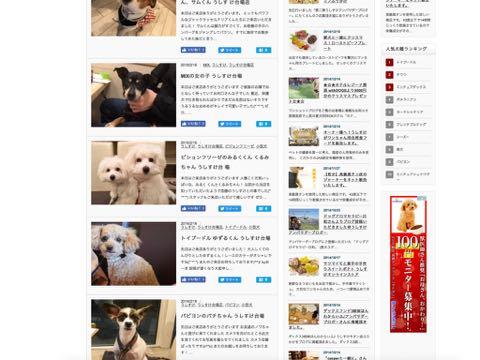 ビションフリーゼこいぬ情報フントヒュッテビションこいぬ画像子犬の社会化ビション赤ちゃんおんなのこかわいいビションフリーゼおとこのこ東京ビション出産情報性格ビション家族募集中_1610