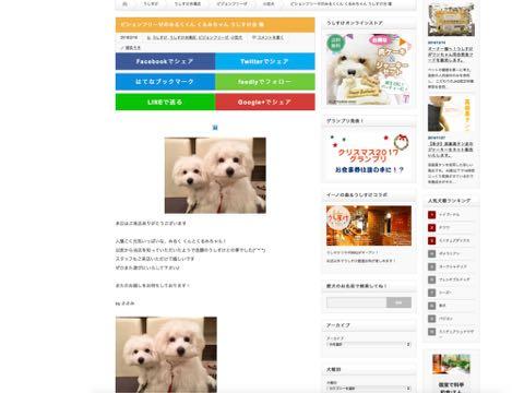 ビションフリーゼこいぬ情報フントヒュッテビションこいぬ画像子犬の社会化ビション赤ちゃんおんなのこかわいいビションフリーゼおとこのこ東京ビション出産情報性格ビション家族募集中_1611