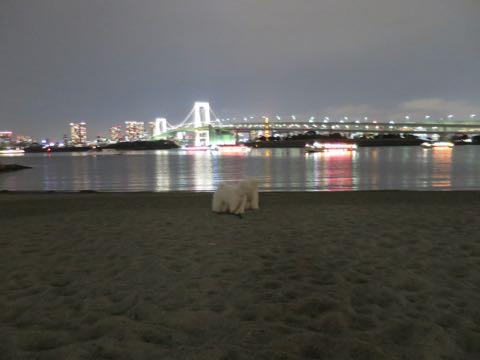 ビションフリーゼこいぬ情報フントヒュッテビションこいぬ画像子犬の社会化ビション赤ちゃんおんなのこかわいいビションフリーゼおとこのこ東京ビション出産情報性格ビション家族募集中_1622