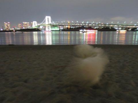 ビションフリーゼこいぬ情報フントヒュッテビションこいぬ画像子犬の社会化ビション赤ちゃんおんなのこかわいいビションフリーゼおとこのこ東京ビション出産情報性格ビション家族募集中_1629