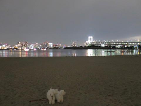 ビションフリーゼこいぬ情報フントヒュッテビションこいぬ画像子犬の社会化ビション赤ちゃんおんなのこかわいいビションフリーゼおとこのこ東京ビション出産情報性格ビション家族募集中_1640