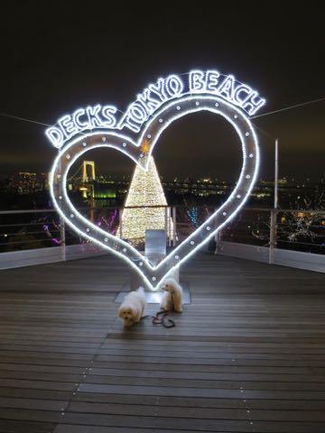 ビションフリーゼこいぬ情報フントヒュッテビションこいぬ画像子犬の社会化ビション赤ちゃんおんなのこかわいいビションフリーゼおとこのこ東京ビション出産情報性格ビション家族募集中_1648