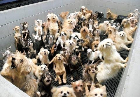 「子犬工場」400匹を過密飼育 虐待疑い