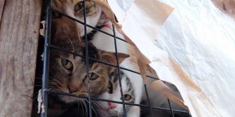 猫20匹「飼育放棄」ケージ野ざらし、ミイラ化死骸も…「ネグレクト」の現場_1