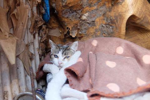 猫20匹「飼育放棄」ケージ野ざらし、ミイラ化死骸も…「ネグレクト」の現場_2