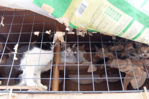 猫20匹「飼育放棄」ケージ野ざらし、ミイラ化死骸も…「ネグレクト」の現場_3