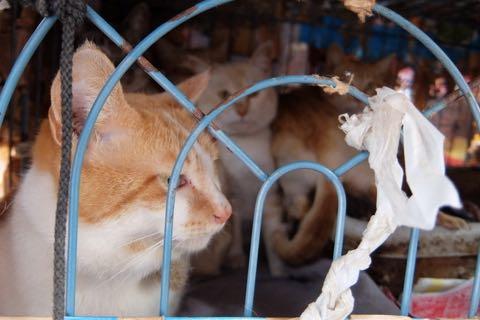 猫20匹「飼育放棄」ケージ野ざらし、ミイラ化死骸も…「ネグレクト」の現場_5
