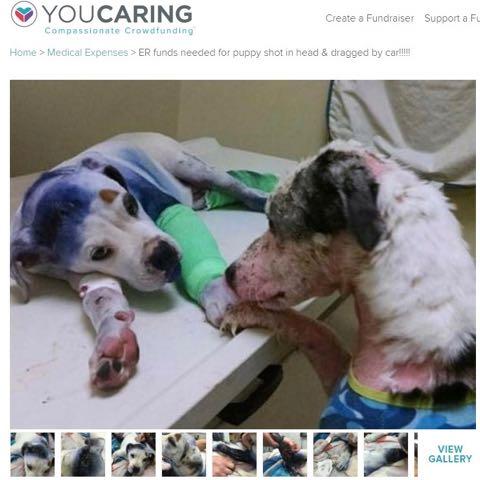 瀕死の犬に寄り添う犬 犬同士しか分からぬ心のつながりに涙(米)