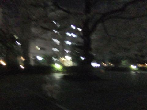ビションフリーゼトリミング文京区フントヒュッテ駒込hundehutteビション子犬トリミング都内こいぬビションチャンピオン犬血統毛量東京かわいいビション画像_80
