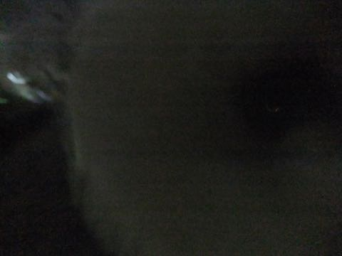 ビションフリーゼトリミング文京区フントヒュッテ駒込hundehutteビション子犬トリミング都内こいぬビションチャンピオン犬血統毛量東京かわいいビション画像_83