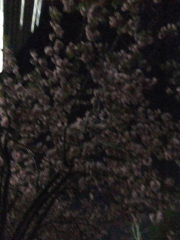 ビションフリーゼトリミング文京区フントヒュッテ駒込ビションフリーゼテディベアカット画像犬カットモデル都内ビショントリミングサロン東京hundehutte_191