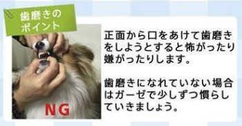 マジックゼオプロ犬の歯石取りゼオライト効果歯垢歯石除去犬の歯磨き歯周病予防犬のデンタルケア画像犬の歯磨きやり方 MAGIC ZEO PRO 薬品は一切使含まれておりません_8.jpg