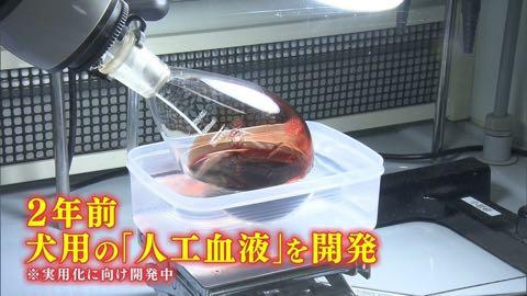 """【特集】高まる犬の""""輸血""""需要 「供血犬」が救う命_5.jpg"""