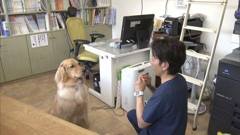 """【特集】高まる犬の""""輸血""""需要 「供血犬」が救う命_6.jpg"""