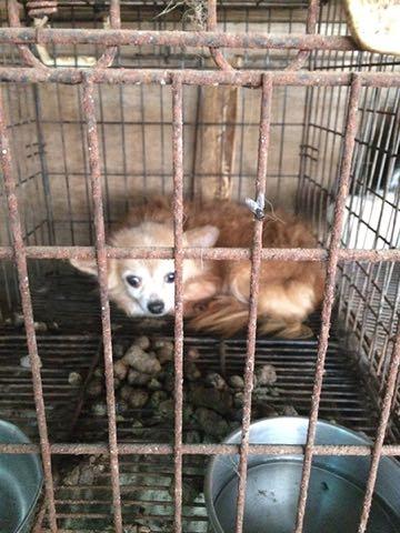 繁殖させすぎた犬猫を有料で引き取り虐待する業者が暗躍中.jpg