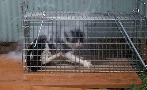 動物虐待を「芸術作品」と喜ぶ人々の闇、罰則強化と根本治療を考える.jpg