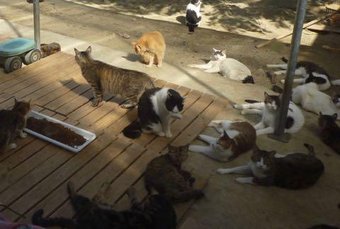 動物虐待、荒んだ現状に犬猫1700匹を救った女性が喝「エサだけあげる人は加害者」_1.jpg