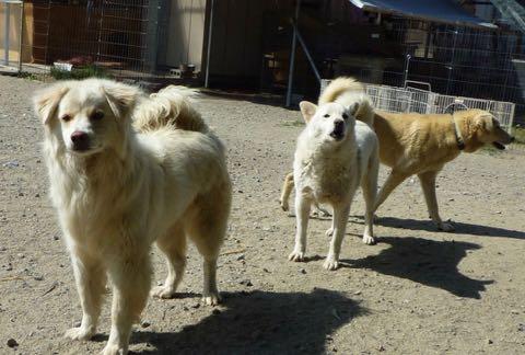 動物虐待、荒んだ現状に犬猫1700匹を救った女性が喝「エサだけあげる人は加害者」_4.jpg