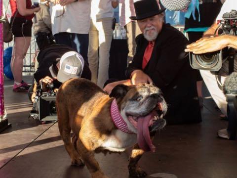 殺処分免れた 世界一醜い犬 動物保護シェルター収容の現実PR 米国 _ 1.jpg