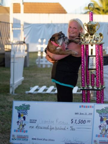 殺処分免れた 世界一醜い犬 動物保護シェルター収容の現実PR 米国 _ 2.jpg