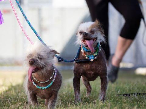 殺処分免れた 世界一醜い犬 動物保護シェルター収容の現実PR 米国 _ 4.jpg