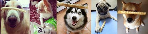 BokBokボクボク犬用おやつ無添加無着色サメ効果グルコサミンコンドロイチンコラーゲンカルシウム関節皮膚鮫画像_2.jpg