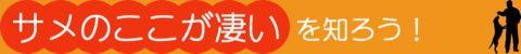 BokBokボクボク犬用おやつ無添加無着色サメ効果グルコサミンコンドロイチンコラーゲンカルシウム関節皮膚鮫画像_5.jpg