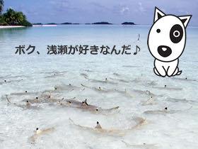 BokBokボクボク犬用おやつ無添加無着色サメ効果グルコサミンコンドロイチンコラーゲンカルシウム関節皮膚鮫画像_8.jpg