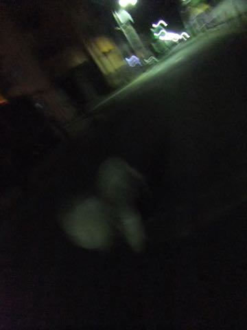 ビションフリーゼトリミング東京フントヒュッテ駒込ビショントリミングサロン都内ビションフリーゼトリミング画像ビションフリーゼ丸く文京区hundehutte_194.jpg