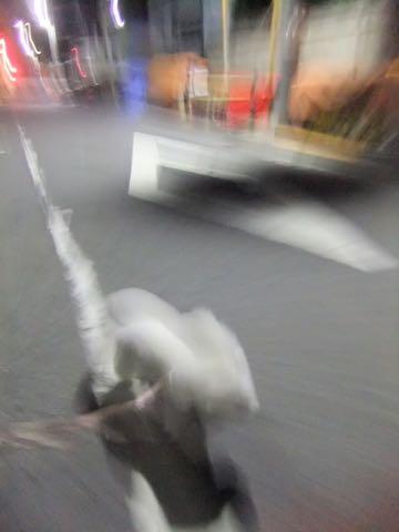 ビションフリーゼトリミング東京フントヒュッテ駒込ビショントリミングサロン都内ビションフリーゼトリミング画像ビションフリーゼ丸く文京区hundehutte_213.jpg