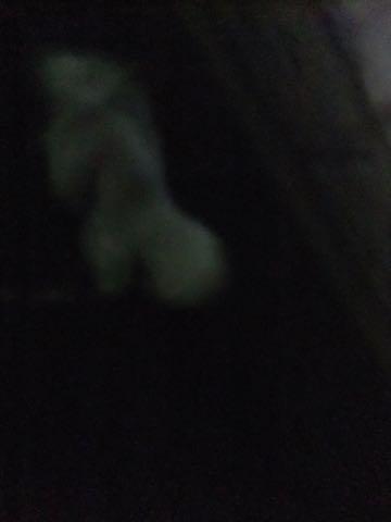ビションフリーゼトリミング東京フントヒュッテ駒込ビショントリミングサロン都内ビションフリーゼトリミング画像ビションフリーゼ丸く文京区hundehutte_222.jpg
