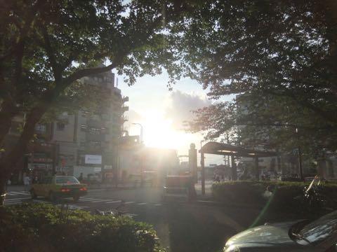 ダックスフントトリミング東京フントヒュッテ文京区トリミングサロンダックスワイヤーヘアー画像ダックスカットモデル_38.jpg