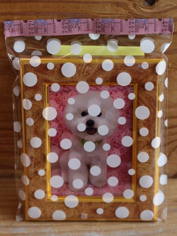 ビションフリーゼトリミング文京区フントヒュッテ駒込ビションカットスタイルモデル犬画像ビションフリーゼ頭丸く都内トリミングサロンビション東京hundehutte_41.jpg