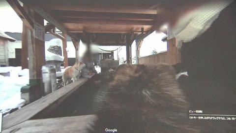 世界的ブーム!秋田犬の目線で観光案内_5.jpg