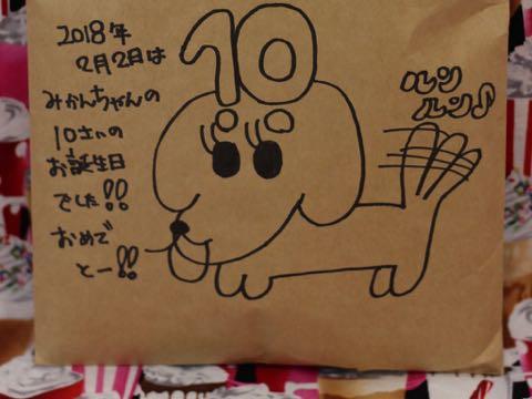 ダックスフントミニチュアトリミング都内フントヒュッテ駒込ダックスサマーカット画像ダックスブラックタン東京hundehutte犬シャンプー_10.jpg