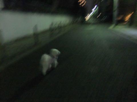 ビションフリーゼトリミング文京区フントヒュッテ駒込ビションフリーゼテディベアカット画像犬カットモデル都内ビショントリミングサロン東京hundehutte_233.jpg