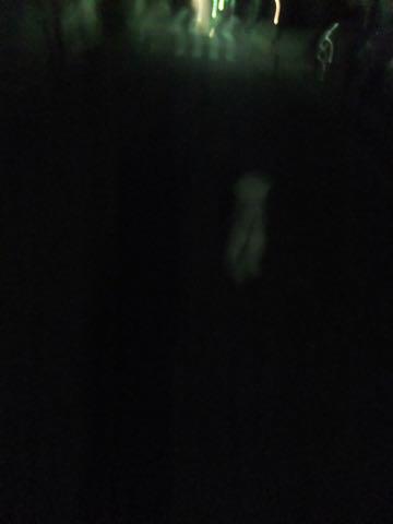 ビションフリーゼトリミング文京区フントヒュッテ駒込ビションフリーゼテディベアカット画像犬カットモデル都内ビショントリミングサロン東京hundehutte_235.jpg
