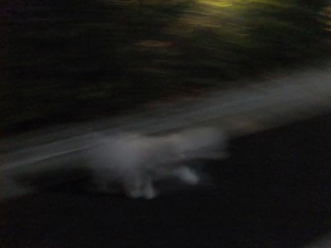ビションフリーゼトリミング文京区フントヒュッテ駒込ビションフリーゼテディベアカット画像犬カットモデル都内ビショントリミングサロン東京hundehutte_237.jpg