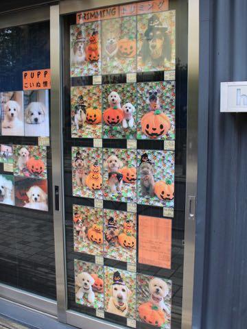 ビションフリーゼトリミングフントヒュッテビションカットスタイルモデル犬画像ビションフリーゼトリミングサロン東京ビションhundehutteビションベアカット_4.jpg