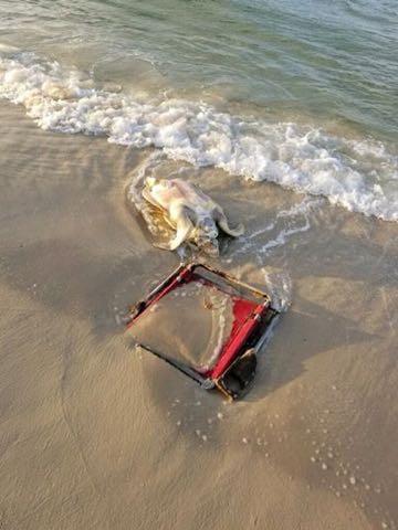 ビーチ・チェアと死んだウミガメ 覚えておきたい1枚の写真 _ 1.jpg