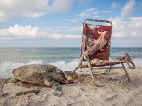 ビーチ・チェアと死んだウミガメ 覚えておきたい1枚の写真 _ 2.jpg