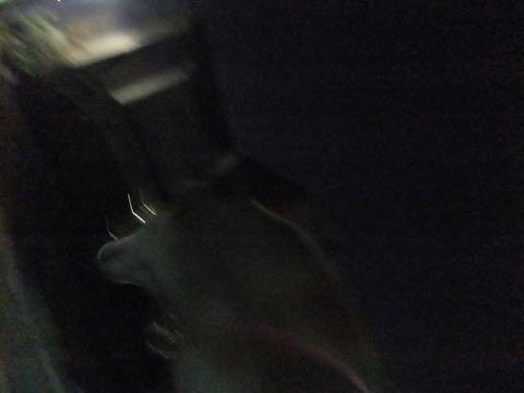 ミックス犬トリミング都内柴犬ミックス抜け毛時期柴犬ミックスシャンプー文京区フントヒュッテ駒込犬歯垢歯石におい口臭歯周病犬の歯磨きデンタルケア効果画像ペットホテル東京_177.jpg