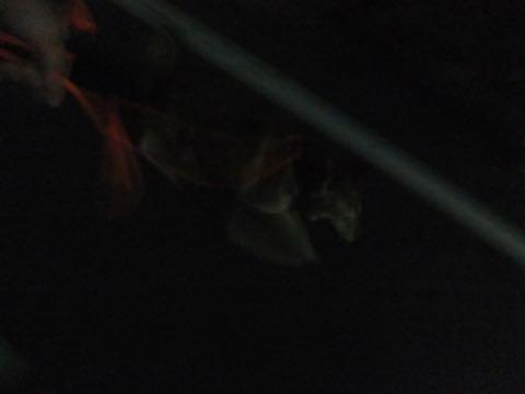 ミックス犬トリミング都内柴犬ミックス抜け毛時期柴犬ミックスシャンプー文京区フントヒュッテ駒込犬歯垢歯石におい口臭歯周病犬の歯磨きデンタルケア効果画像ペットホテル東京_273.jpg