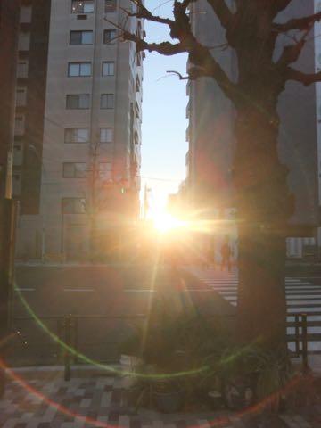 チワワトリミング文京区フントヒュッテチワワサマーカット画像ペットホテル東京ドッグホテル様子おさんぽ犬ホテル料金hundehutte駒込_189.jpg
