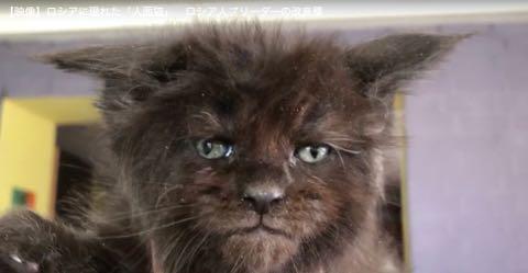 ロシアに現れた「人面猫」 ロシア人ブリーダーの改良種.jpg
