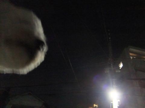 ビションフリーゼトリミングフントヒュッテビションカットスタイルモデル犬画像ビションフリーゼトリミングサロン東京ビションhundehutteビションベアカット_71.jpg