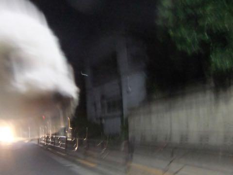 ビションフリーゼトリミングフントヒュッテビションカットスタイルモデル犬画像ビションフリーゼトリミングサロン東京ビションhundehutteビションベアカット_72.jpg