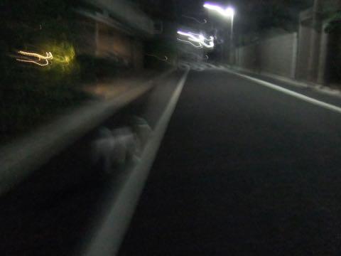 ビションフリーゼトリミングフントヒュッテビションカットスタイルモデル犬画像ビションフリーゼトリミングサロン東京ビションhundehutteビションベアカット_73.jpg
