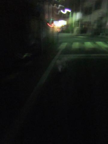 ビションフリーゼトリミングフントヒュッテビションカットスタイルモデル犬画像ビションフリーゼトリミングサロン東京ビションhundehutteビションベアカット_75.jpg