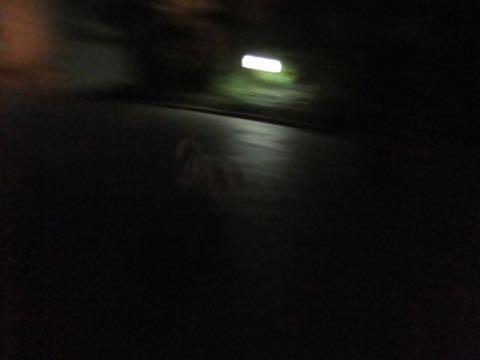 ビションフリーゼトリミングフントヒュッテビションカットスタイルモデル犬画像ビションフリーゼトリミングサロン東京ビションhundehutteビションベアカット_81.jpg